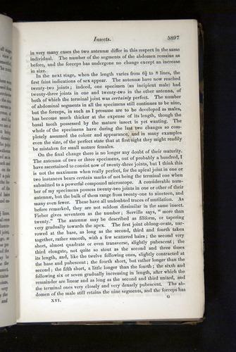 Image of Darwin-F349-1858-Zoologist-v16-05897