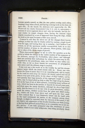 Image of Darwin-F349-1858-Zoologist-v16-05898