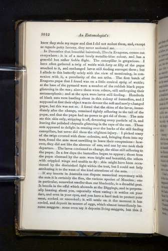 Image of Darwin-F349-1858-Zoologist-v16-05912