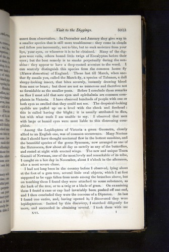 Image of Darwin-F349-1858-Zoologist-v16-05913