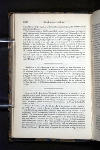Image of Darwin-F349-1858-Zoologist-v16-05920