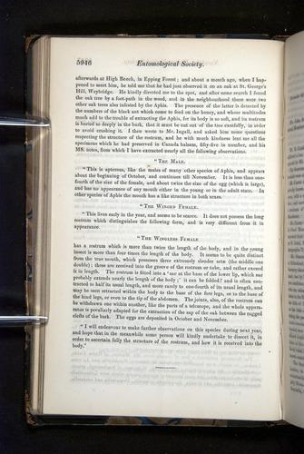 Image of Darwin-F349-1858-Zoologist-v16-05946