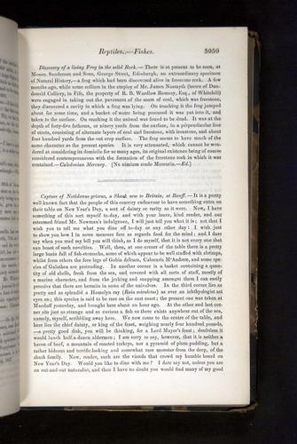 Image of Darwin-F349-1858-Zoologist-v16-05959