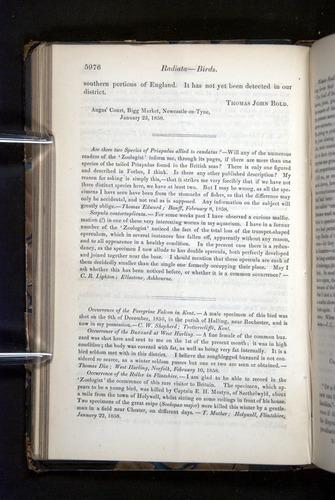 Image of Darwin-F349-1858-Zoologist-v16-05976
