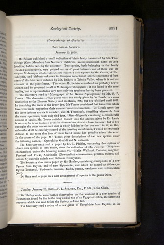 Image of Darwin-F349-1858-Zoologist-v16-05991