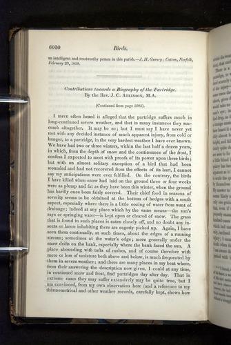Image of Darwin-F349-1858-Zoologist-v16-06010