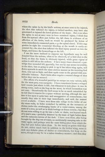 Image of Darwin-F349-1858-Zoologist-v16-06012
