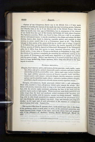 Image of Darwin-F349-1858-Zoologist-v16-06032