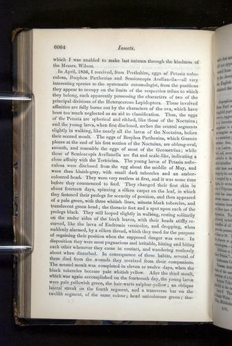 Image of Darwin-F349-1858-Zoologist-v16-06064