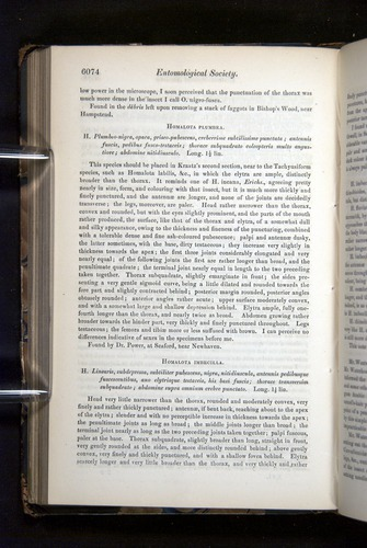 Image of Darwin-F349-1858-Zoologist-v16-06074