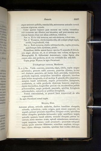 Image of Darwin-F349-1858-Zoologist-v16-06107