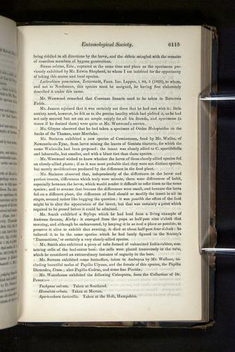 Image of Darwin-F349-1858-Zoologist-v16-06115