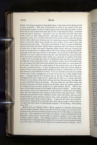 Image of Darwin-F349-1858-Zoologist-v16-06142