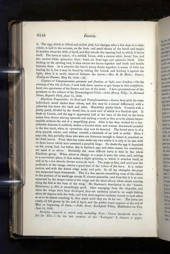 Image of Darwin-F349-1858-Zoologist-v16-06146