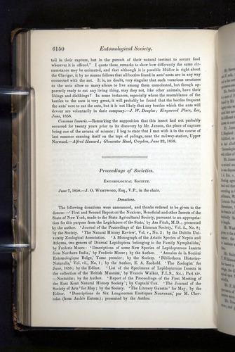 Image of Darwin-F349-1858-Zoologist-v16-06150