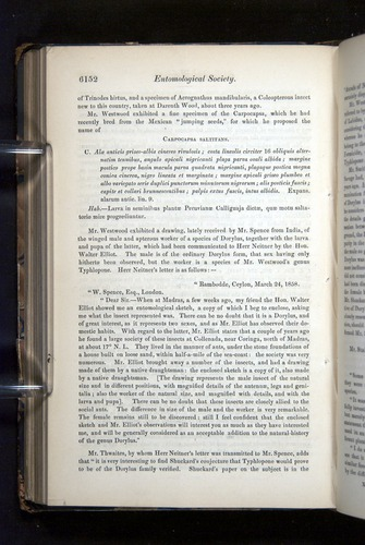 Image of Darwin-F349-1858-Zoologist-v16-06152