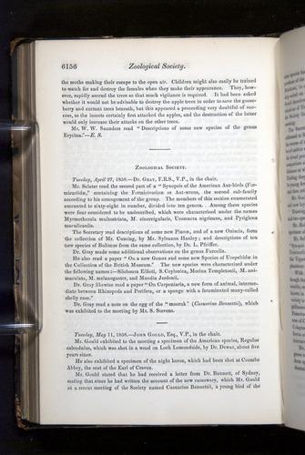 Image of Darwin-F349-1858-Zoologist-v16-06156