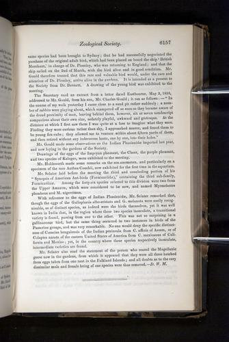 Image of Darwin-F349-1858-Zoologist-v16-06157