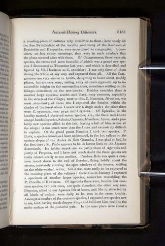 Image of Darwin-F349-1858-Zoologist-v16-06163