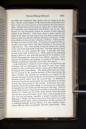 Image of Darwin-F349-1858-Zoologist-v16-06167