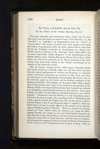 Image of Darwin-F349-1858-Zoologist-v16-06170