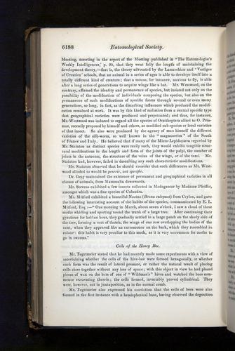 Image of Darwin-F349-1858-Zoologist-v16-06188
