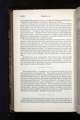 Image of Darwin-F349-1858-Zoologist-v16-06210