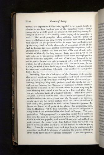 Image of Darwin-F349-1858-Zoologist-v16-06226