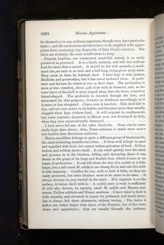 Image of Darwin-F349-1858-Zoologist-v16-06232