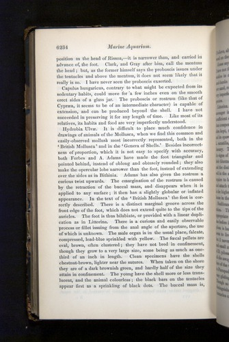 Image of Darwin-F349-1858-Zoologist-v16-06234