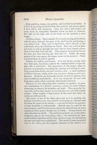 Image of Darwin-F349-1858-Zoologist-v16-06236