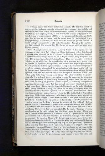 Image of Darwin-F349-1858-Zoologist-v16-06250