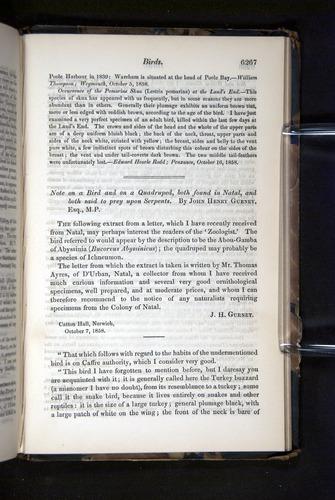 Image of Darwin-F349-1858-Zoologist-v16-06267
