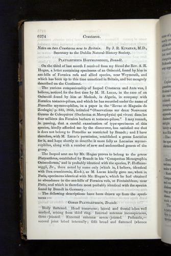 Image of Darwin-F349-1858-Zoologist-v16-06274