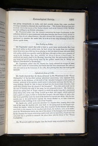 Image of Darwin-F349-1858-Zoologist-v16-06291