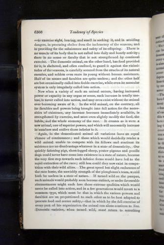 Image of Darwin-F349-1858-Zoologist-v16-06306