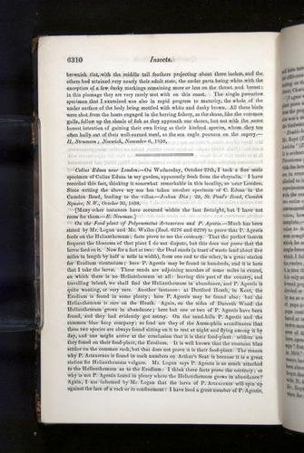 Image of Darwin-F349-1858-Zoologist-v16-06310