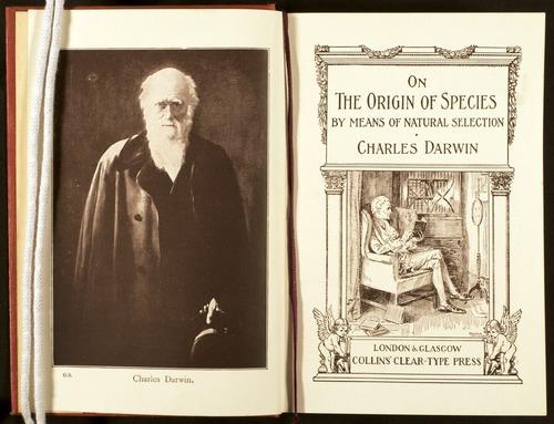 Image of Darwin-F512-1910-000-fp-tp