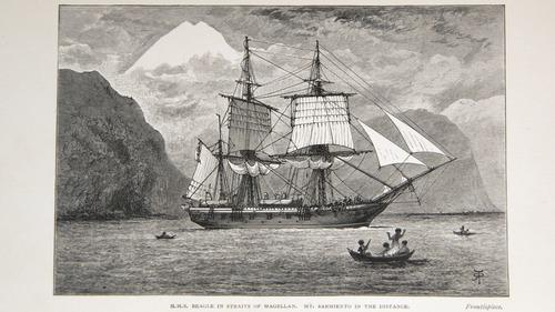 Image of Darwin-F64-1890-zzzz-det-000-fpv