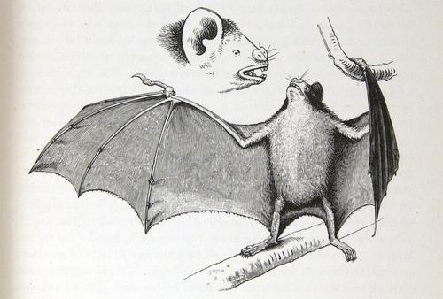 Image of Darwin-F64-1890-zzzz-det-023