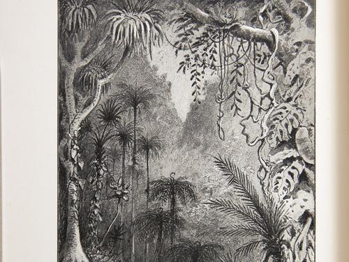 Image of Darwin-F64-1890-zzzz-det-024-f1v