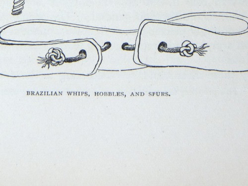Image of Darwin-F64-1890-zzzz-det-075