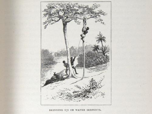 Image of Darwin-F64-1890-zzzz-det-103