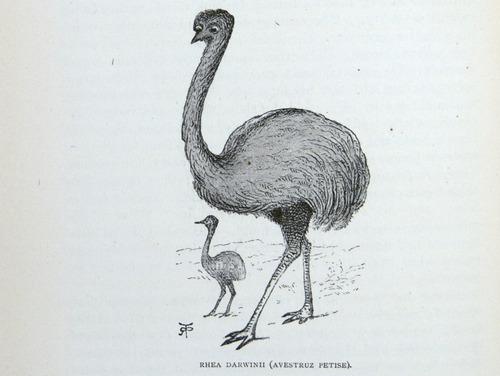 Image of Darwin-F64-1890-zzzz-det-110