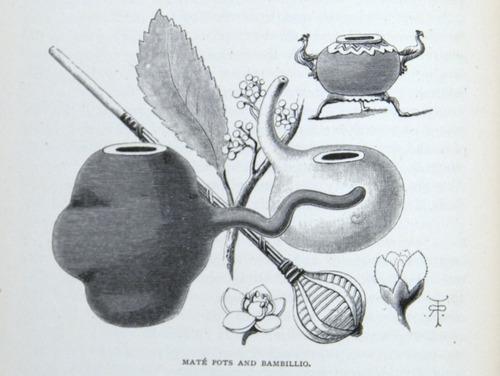 Image of Darwin-F64-1890-zzzz-det-118