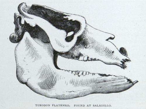 Image of Darwin-F64-1890-zzzz-det-134