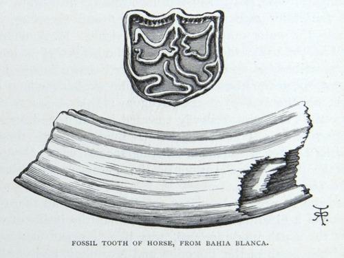Image of Darwin-F64-1890-zzzz-det-138
