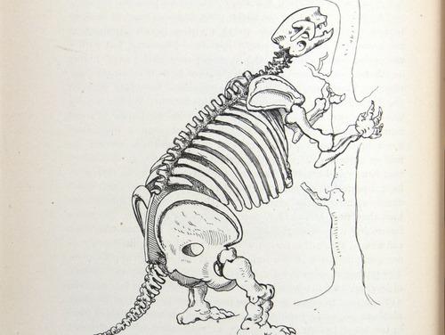 Image of Darwin-F64-1890-zzzz-det-140