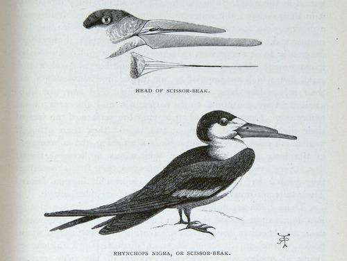 Image of Darwin-F64-1890-zzzz-det-145