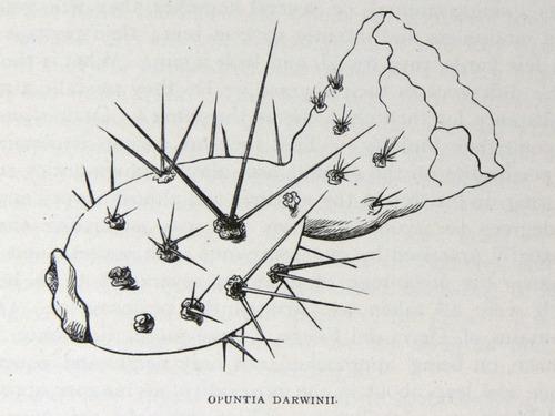 Image of Darwin-F64-1890-zzzz-det-175